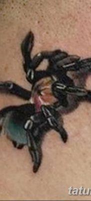 фото тату тарантул от 21.11.2017 №024 – tattoo tarantula – tatufoto.com