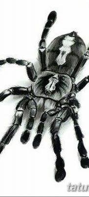 фото тату тарантул от 21.11.2017 №027 – tattoo tarantula – tatufoto.com