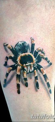 фото тату тарантул от 21.11.2017 №036 – tattoo tarantula – tatufoto.com