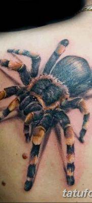 фото тату тарантул от 21.11.2017 №043 – tattoo tarantula – tatufoto.com