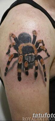 фото тату тарантул от 21.11.2017 №050 – tattoo tarantula – tatufoto.com