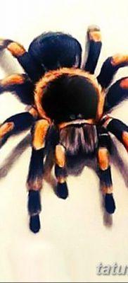 фото тату тарантул от 21.11.2017 №052 – tattoo tarantula – tatufoto.com