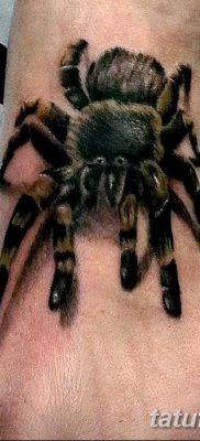 фото тату тарантул от 21.11.2017 №053 – tattoo tarantula – tatufoto.com