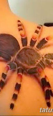 фото тату тарантул от 21.11.2017 №069 – tattoo tarantula – tatufoto.com