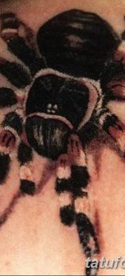 фото тату тарантул от 21.11.2017 №074 – tattoo tarantula – tatufoto.com