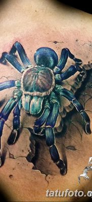 фото тату тарантул от 21.11.2017 №079 – tattoo tarantula – tatufoto.com