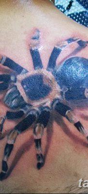 фото тату тарантул от 21.11.2017 №089 – tattoo tarantula – tatufoto.com