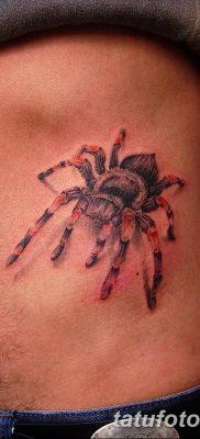 фото тату тарантул от 21.11.2017 №091 – tattoo tarantula – tatufoto.com