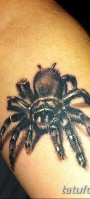 фото тату тарантул от 21.11.2017 №092 – tattoo tarantula – tatufoto.com
