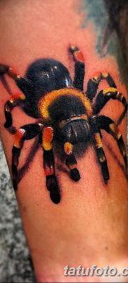 фото тату тарантул от 21.11.2017 №097 – tattoo tarantula – tatufoto.com