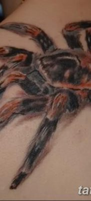 фото тату тарантул от 21.11.2017 №099 – tattoo tarantula – tatufoto.com