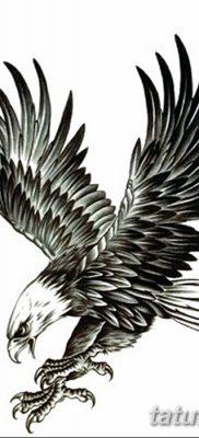 фото тату беркут от 10.12.2017 №065 – golden eagle tattoos – tatufoto.com