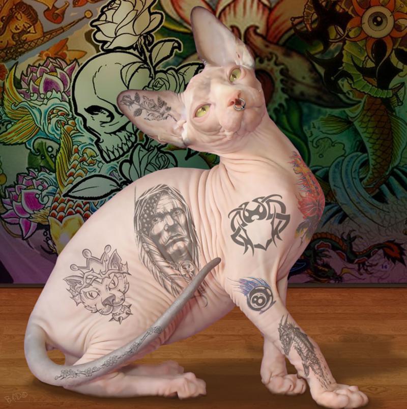 Кот с тюремными татуировками из Екатеринбурга