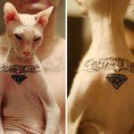 Кот с тюремными татуировками из Екатеринбурга - фото 9