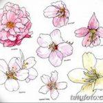 фото Эскизы тату Сакура от 27.01.2018 №047 - Sketches of Sakura tattoo - tatufoto.com