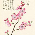 фото Эскизы тату Сакура от 27.01.2018 №060 - Sketches of Sakura tattoo - tatufoto.com