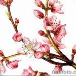 фото Эскизы тату Сакура от 27.01.2018 №080 - Sketches of Sakura tattoo - tatufoto.com