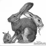 фото Эскизы тату кролик от 09.01.2018 №018 - Sketches of a rabbit tattoo - tatufoto.com