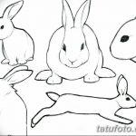 фото Эскизы тату кролик от 09.01.2018 №030 - Sketches of a rabbit tattoo - tatufoto.com