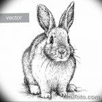 фото Эскизы тату кролик от 09.01.2018 №042 - Sketches of a rabbit tattoo - tatufoto.com
