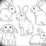 фото Эскизы тату кролик от 09.01.2018 №043 - Sketches of a rabbit tattoo - tatufoto.com