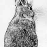 фото Эскизы тату кролик от 09.01.2018 №044 - Sketches of a rabbit tattoo - tatufoto.com