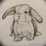 фото Эскизы тату кролик от 09.01.2018 №056 - Sketches of a rabbit tattoo - tatufoto.com