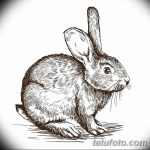 фото Эскизы тату кролик от 09.01.2018 №069 - Sketches of a rabbit tattoo - tatufoto.com