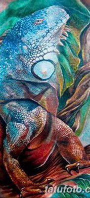 фото тату Игуана от 09.02.2018 №004 – Iguana tattoo – tatufoto.com