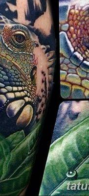 фото тату Игуана от 09.02.2018 №011 – Iguana tattoo – tatufoto.com