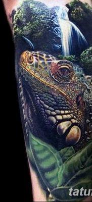 фото тату Игуана от 09.02.2018 №017 – Iguana tattoo – tatufoto.com