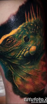 фото тату Игуана от 09.02.2018 №028 – Iguana tattoo – tatufoto.com