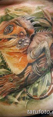 фото тату Игуана от 09.02.2018 №034 – Iguana tattoo – tatufoto.com