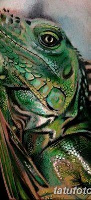 фото тату Игуана от 09.02.2018 №055 – Iguana tattoo – tatufoto.com