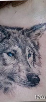 фото тату белый волк от 07.02.2018 №012 – white wolf tattoo – tatufoto.com