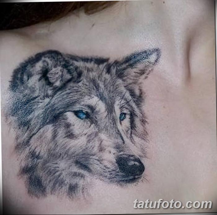 фото тату белый волк от 07.02.2018 №012 - white wolf tattoo - tatufoto.com