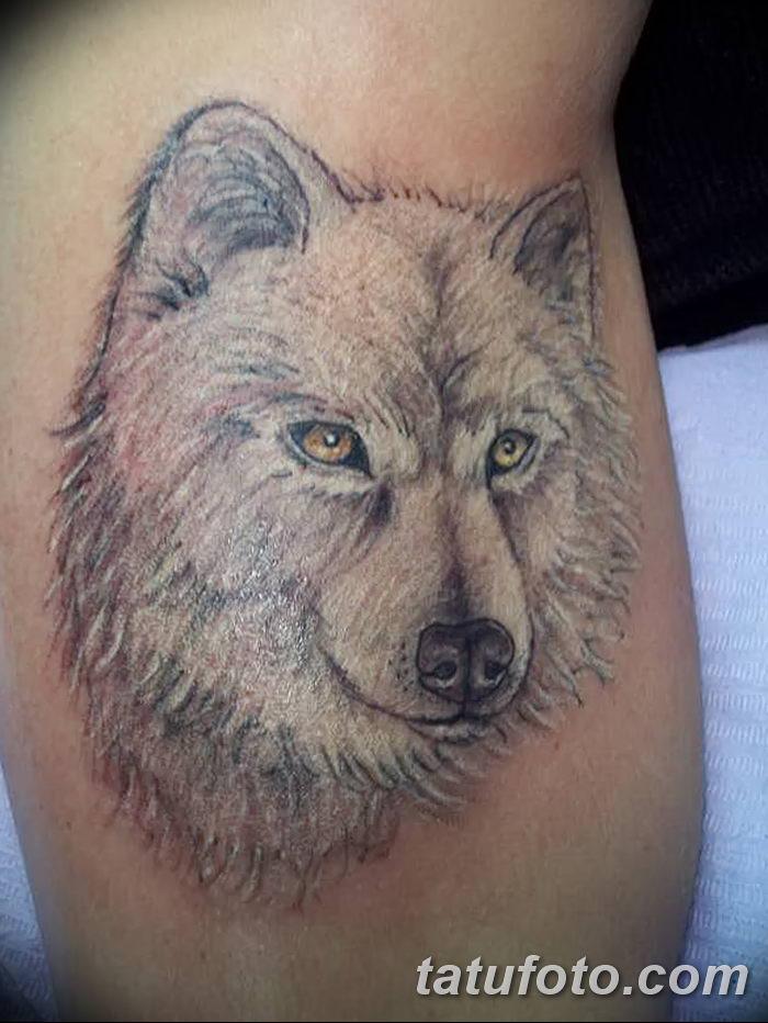 фото тату белый волк от 07.02.2018 №013 - white wolf tattoo - tatufoto.com