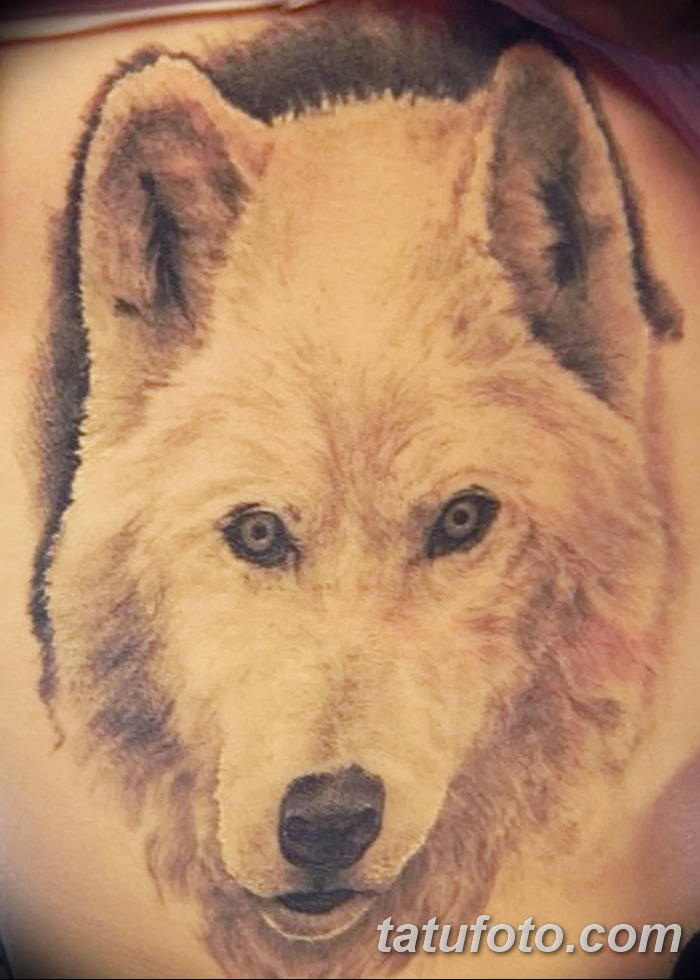 фото тату белый волк от 07.02.2018 №015 - white wolf tattoo - tatufoto.com