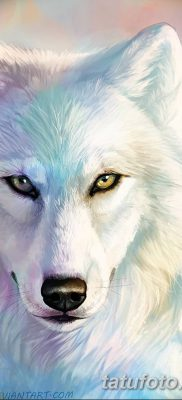 фото тату белый волк от 07.02.2018 №019 – white wolf tattoo – tatufoto.com
