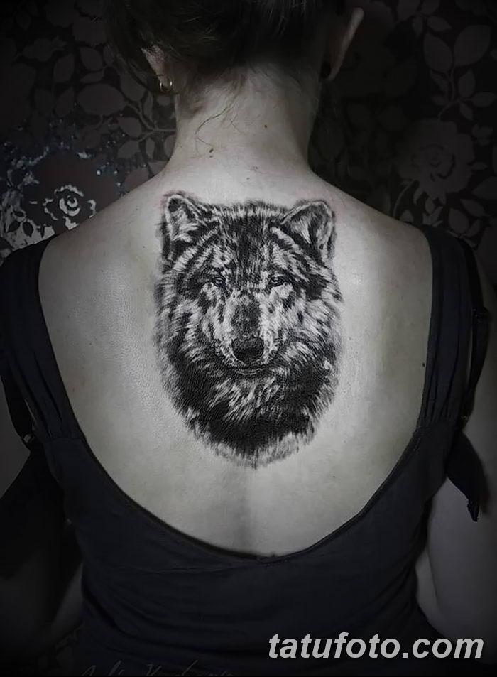 фото тату белый волк от 07.02.2018 №021 - white wolf tattoo - tatufoto.com