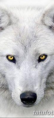 фото тату белый волк от 07.02.2018 №036 – white wolf tattoo – tatufoto.com