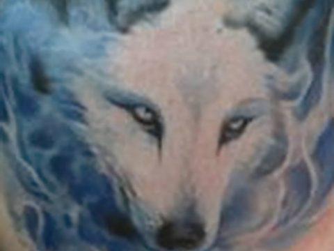 фото тату белый волк от 07.02.2018 №069 - white wolf tattoo - tatufoto.com