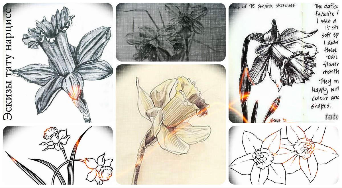 Эскизы тату нарцисс - коллекция интересных рисунков для татуировки