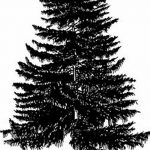 фото Эскизы тату ель от 23.04.2018 №011 - Sketches of a tattoo spruce - tatufoto.com