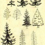 фото Эскизы тату ель от 23.04.2018 №016 - Sketches of a tattoo spruce - tatufoto.com
