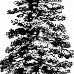 фото Эскизы тату ель от 23.04.2018 №017 - Sketches of a tattoo spruce - tatufoto.com