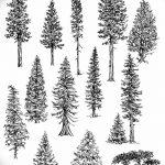 фото Эскизы тату ель от 23.04.2018 №023 - Sketches of a tattoo spruce - tatufoto.com