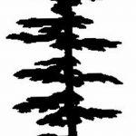 фото Эскизы тату ель от 23.04.2018 №024 - Sketches of a tattoo spruce - tatufoto.com