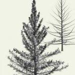 фото Эскизы тату ель от 23.04.2018 №029 - Sketches of a tattoo spruce - tatufoto.com