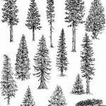 фото Эскизы тату ель от 23.04.2018 №031 - Sketches of a tattoo spruce - tatufoto.com